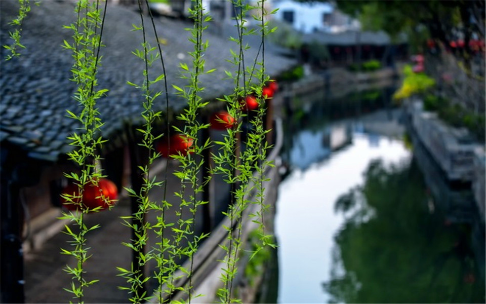 1 Day Luzhi Water Town Tour from Shanghai
