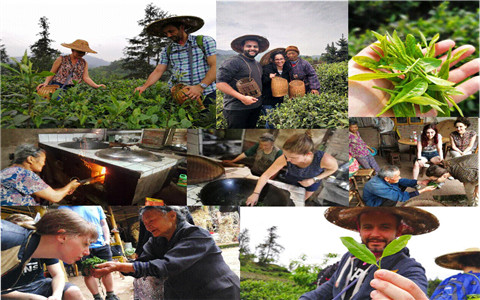 Tea picking activity