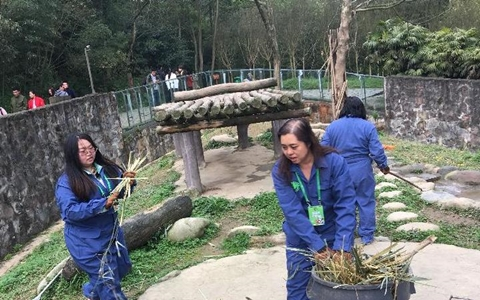 Panda Keeper Experience at Dujiangyan Panda Base(Group Tour)