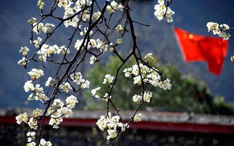 3 Days Spring Jinchuan Pear Flower Sea Tour
